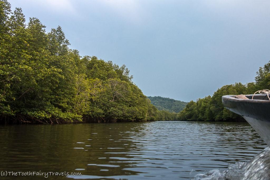Tour through the mangroves